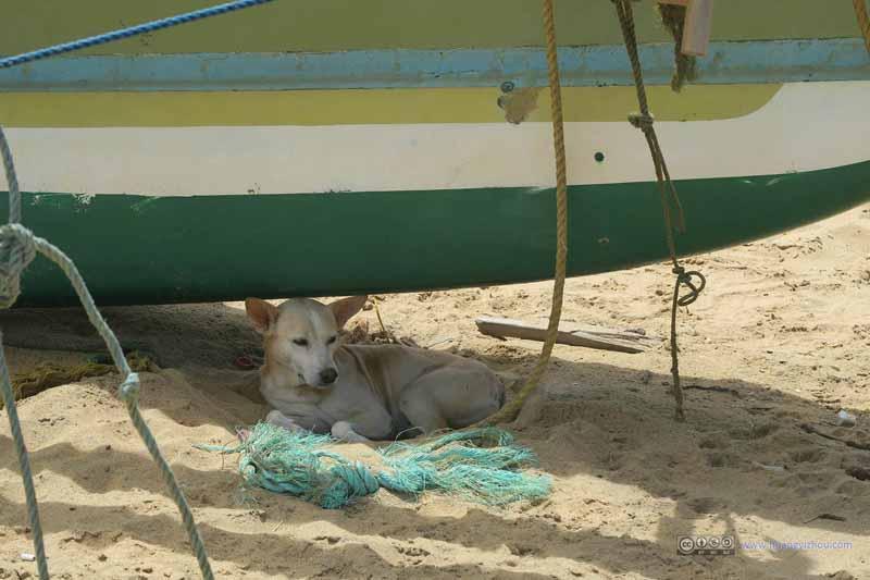 Dog Resting under Fishing Boat