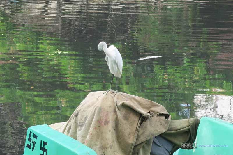 Crane Standing on Fishing Boat