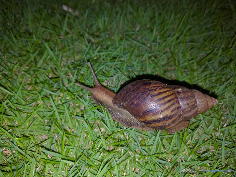Snail in Hotel Grounds
