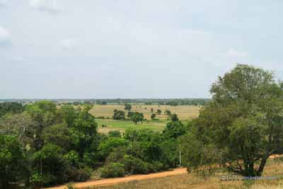 Farmland by Kantale
