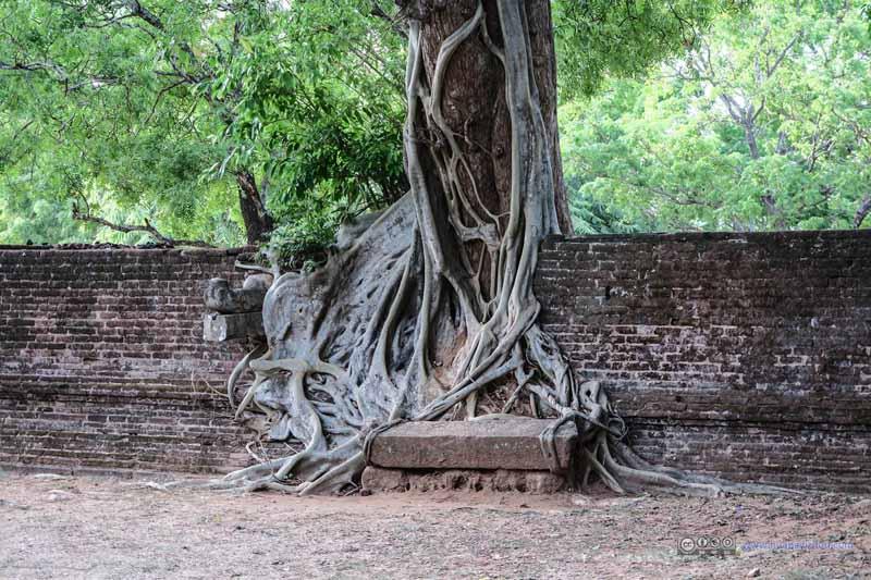 Tree on Wall