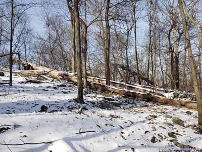 Fallen Trees in Forest