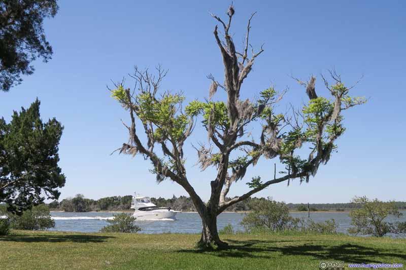 Tree before Matanzas River