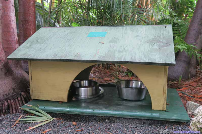 Lunch Room for Cats