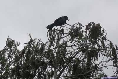 Bird at Tree Top