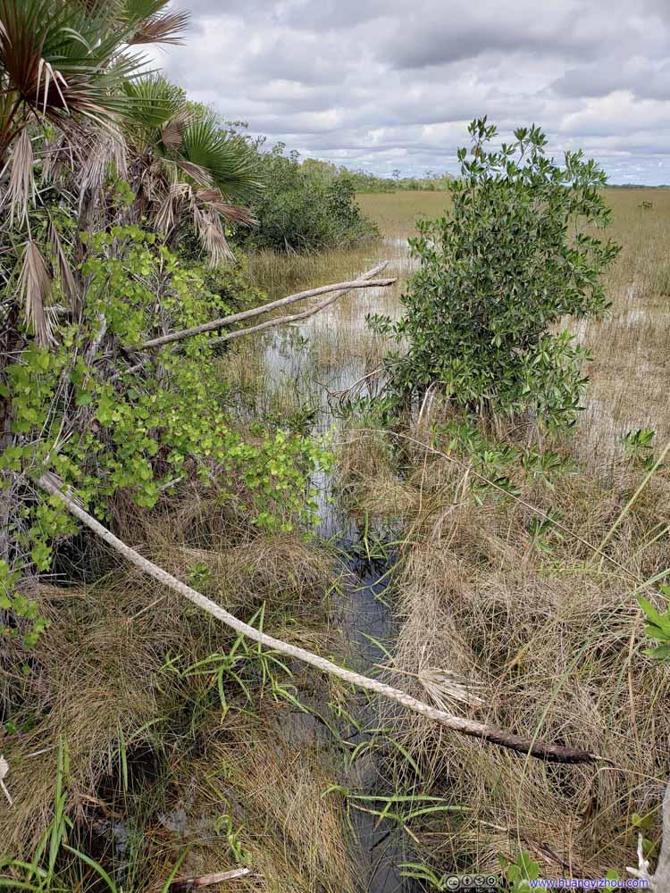 Hammock Moat