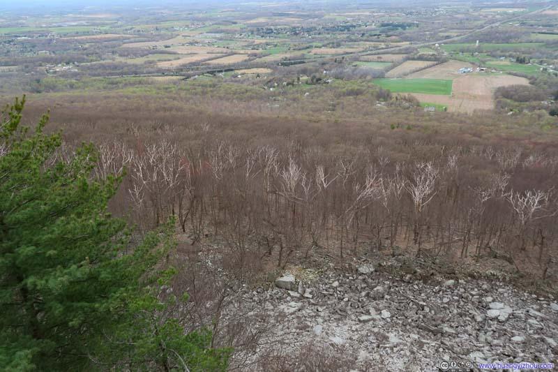 Bleak Forest beneath Black Rock