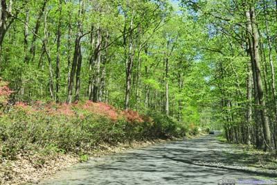 Road up Sugarloaf Mountain
