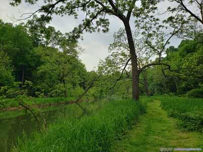 Trees along Deer Creek