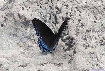 Butterfly on Rocky Edge