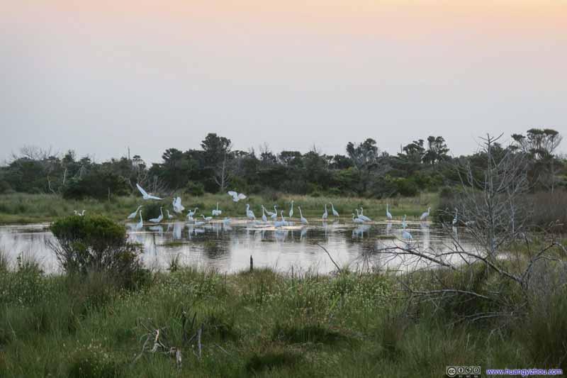 Pond of Cranes