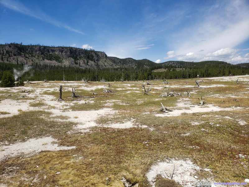Field with Dead Trees