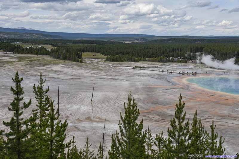 Field by Grand Prismatic Spring