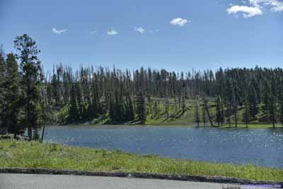 Forest across Yellowstone River