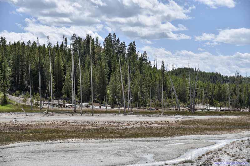 Dead Trees among Geyser Basin