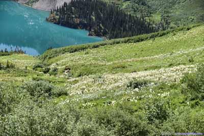 Beargrass Field