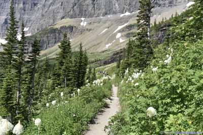 Trail through Beargrass Field