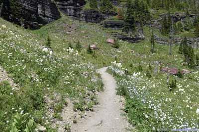 Trail through Flowers