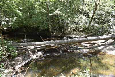 Fallen Tree over Creek