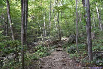 Trail by Creek