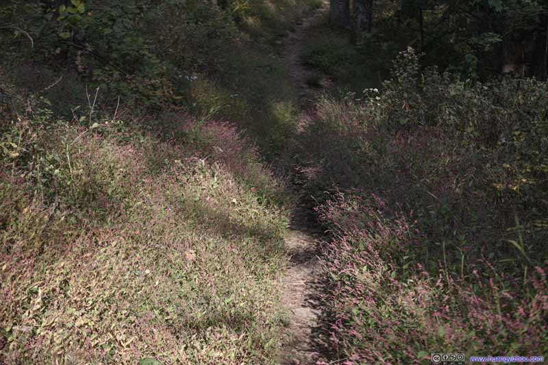 Trail among Wildflowers