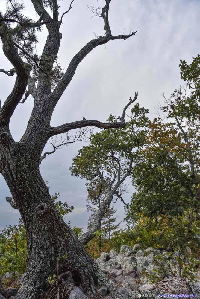 Tree on Summit