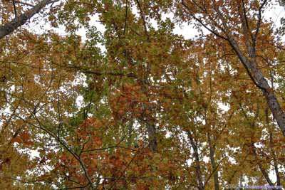 Leaves in Autumn Color