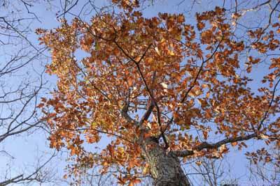 Lingering Leaves