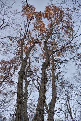 Quaternary Tree!