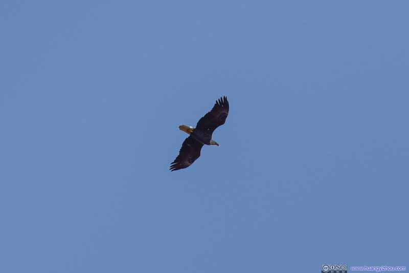 Eagle Overfly