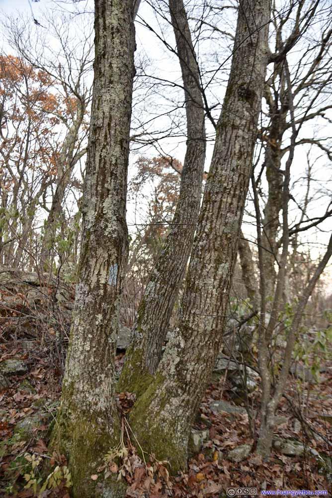 Ternary Tree