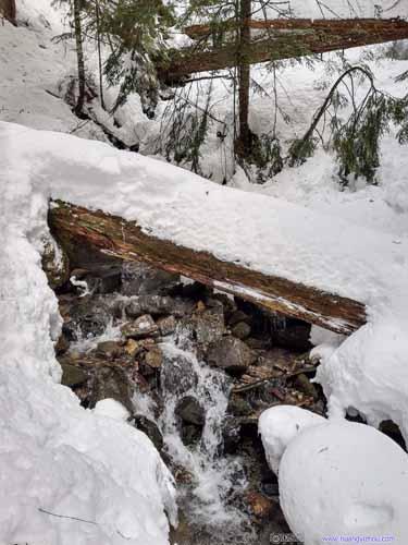 Plank over Creek