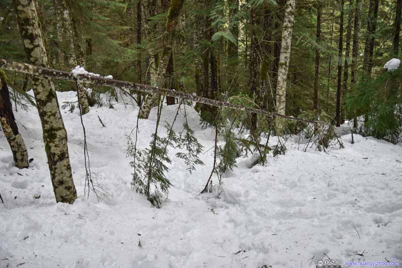 Fallen Tree over Trail