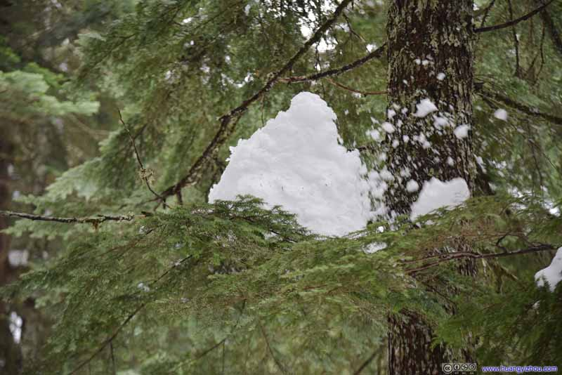 Snow Patches on Trees