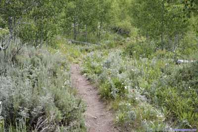 Flowers along Trail