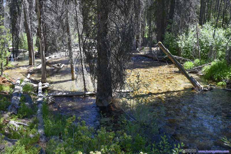 Tree in Creek