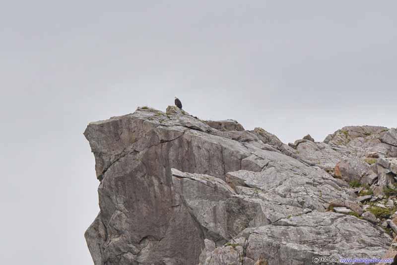 Bald Eagle on Rock