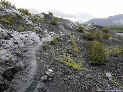 Trail at Exit Glacier