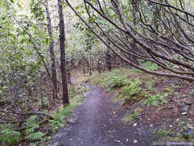 Trail to Exit Glacier