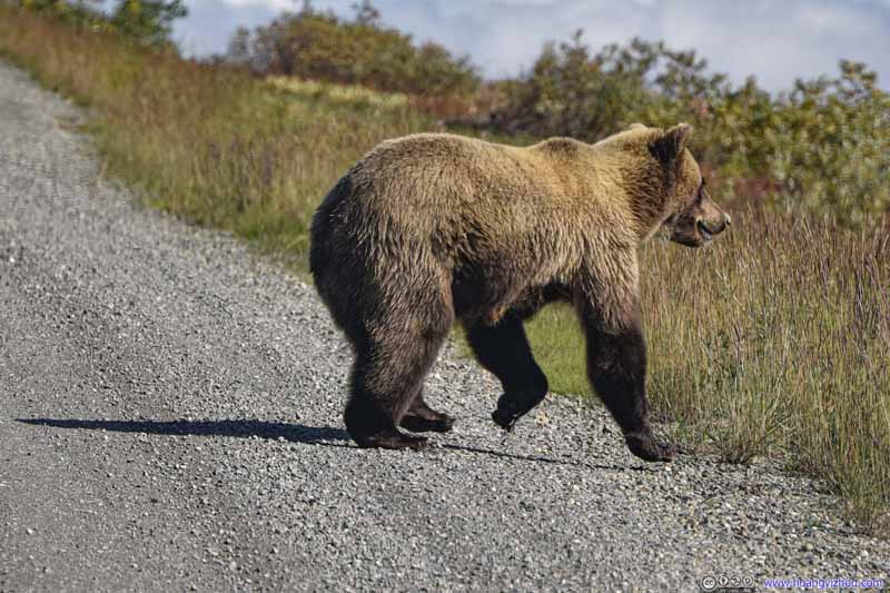 Bear Crossing Road