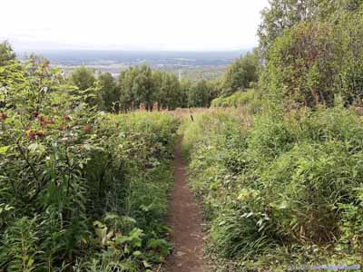 Trail in Field