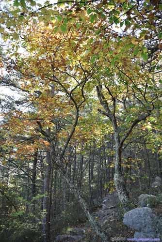 Colors along Trail