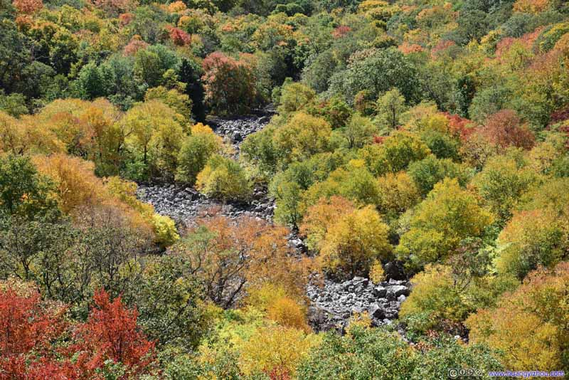 Overlooking Forests in Vivid Colors