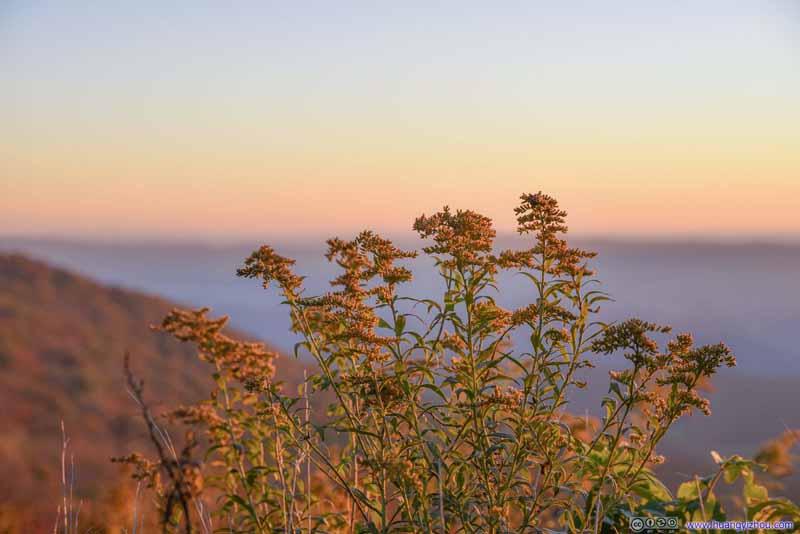 Plants in Sunrise