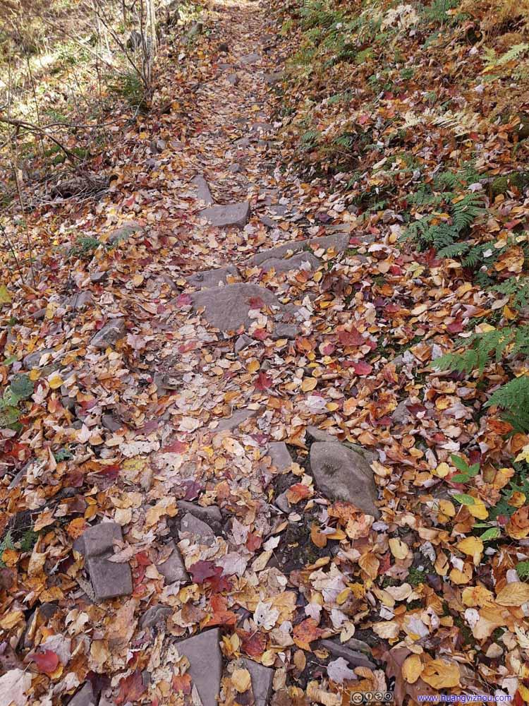 Fallen Leaves on Trail