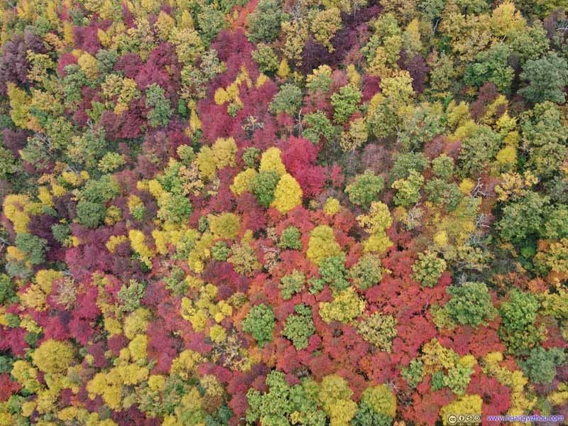 Forest in Varying Colors