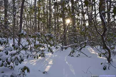 Sun through Woods