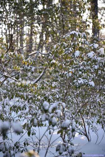 Plants in Snow