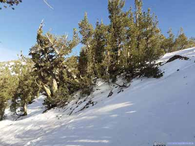 Northern Slope of Ridge