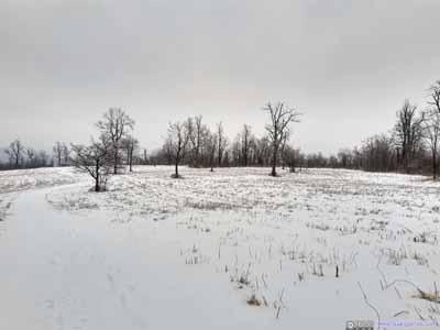 Trail in Open Field